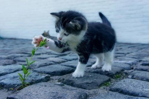 Ilustrasi hewan peliharaan kucing. (Foto: Dimhou/Pixabay)