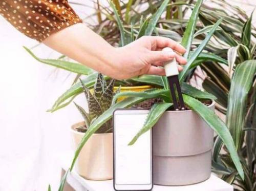 Perangkat canggih tanaman hias. (Foto: Shutterstock/Feminaindia)