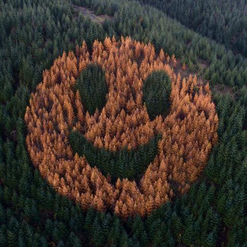 Pohon emotikon wajah tersenyum raksasa di Oregon. (Foto: Instagram @euronewsliving)