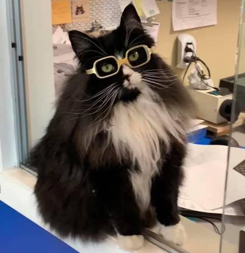 Kucing Truffles bantu anak-anak pakai kacamata. (Foto: Facebook Truffles The Kitty)