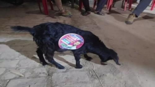 Viral anjing jadi sarana kampanye berjalan di India. (Foto: Oddity Central)