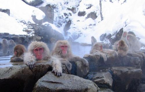 taman monyet