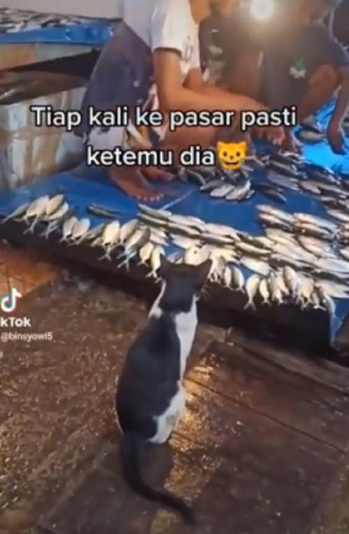 kucing sopan