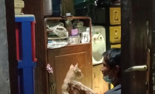 bucin sama kucing