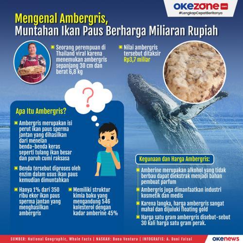 Info grafis ambergris muntahan ikan paus. (Foto: Okezone)