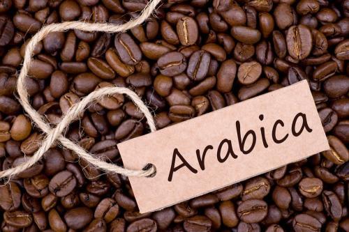 Kopi Arabica