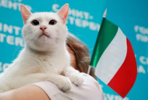 Kucing Achilles ramal pemenang laga Turki vs Italia