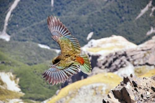 Burung. (Foto: Karl Anderson/Unsplash)