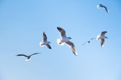Hewan burung. (Foto: Devmaryna/Freepik)
