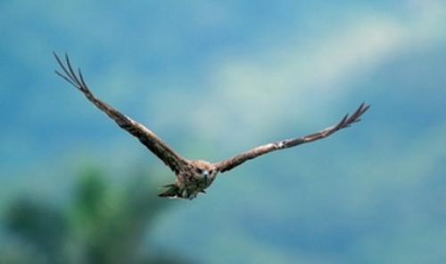 Burung. (Foto: Wirestock/Freepik)