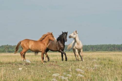 Kuda. (Foto: Annika Treial/Unsplash)