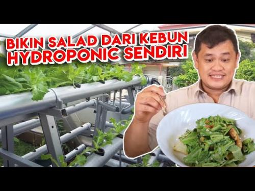 Salad Sayur