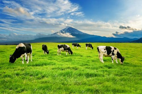 Ilustrasi hewan sapi memberi keuntungan untuk makhluk hidup lain. (Foto: Tawatchai07/Freepik)
