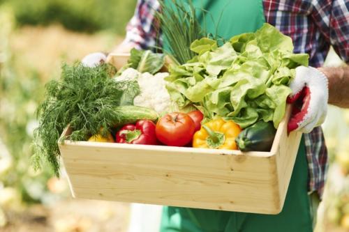 Ilustrasi sayuran. (Foto: Gpointstudio/Freepik)
