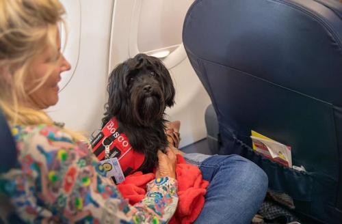 Anjing dalam Kabin Pesawat