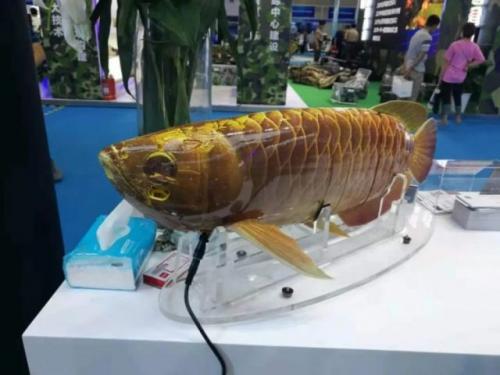 Drone ikan arwana. (Foto: Oddity Central)