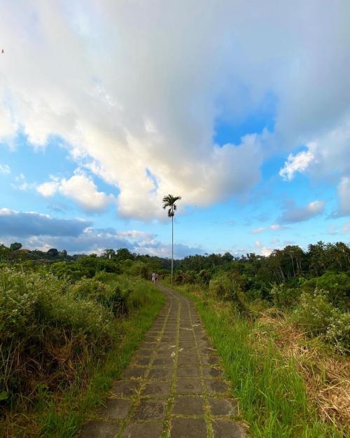 Campuhan Ridge Ubud