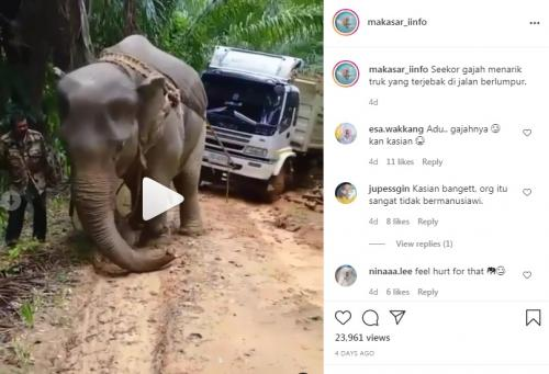 Gajah Tarik Truk