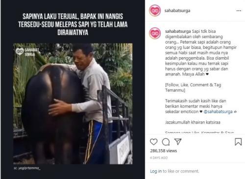 Viral bapak-bapak penjual hewan kurban menangis tersedu-sedu ditinggal sapi kesayangannya. (Foto: Instagram @sahabatsurga)