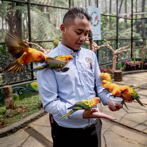 Burung TWGC Lembang
