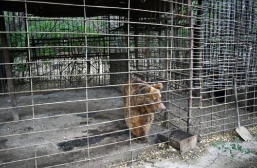 Beruang Buta