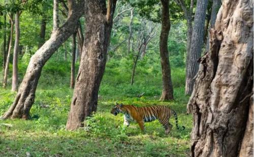 Taman Nasional Kabini, India