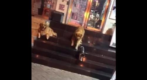 Viral anjing pisahkan dua kucing berkelahi. (Foto: Twitter @MackBeckyComedy)