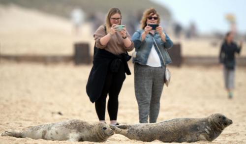 Anjing Laut di Pantai Inggris