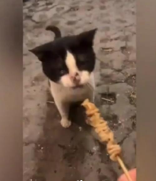 kucing nangis