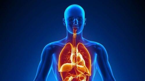 Ilustrasi sistem pendingin alami manusia. (Foto: Britannica)