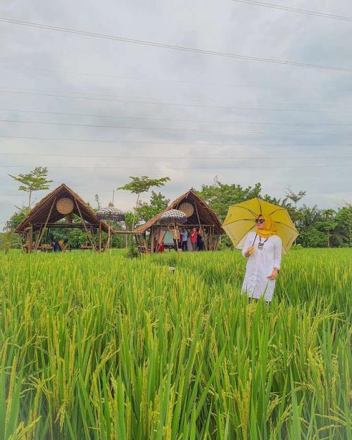 Wisata Sawah Lukis di Binjai