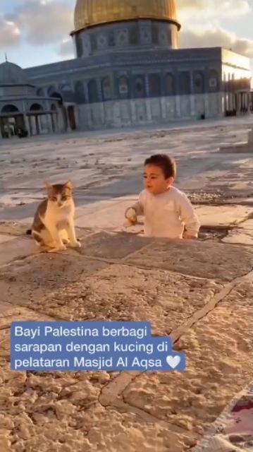 Viral balita Palestina berbagi sarapan dengan kucing di Masjidil Aqsa. (Foto: Instagram @yusufmansurnew/@adararelief)