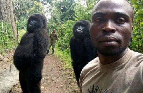 Ndakasi selfie bareng pengasuhnya, Andre Bauma