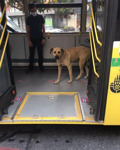 Boji si anjing yang suka naik kendaraan umum.  (Foto: Instagram @boji_ist)